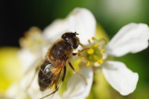 Hoverfly 2 by DoodleBe