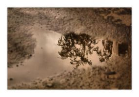Puddle Reflection - 4 by mankeeman