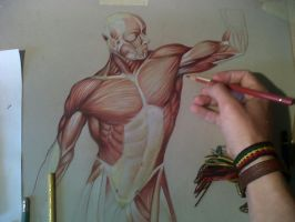 Muscle studio making of by Daviddleonluis