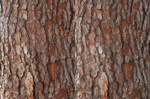 Stereograph - Pine Bark by alanbecker