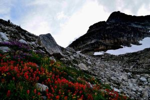 flower mountain by BCMountainClimber