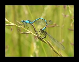 Dragonfly in love by Nina769