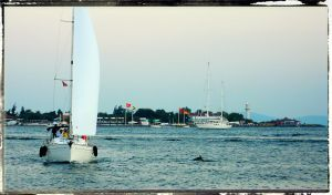 The Dolphin and the Sailboat by cheyrek