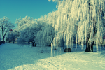 winter wonderland by AnnMe