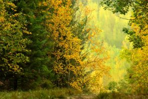 waiting for the autumn by KariLiimatainen