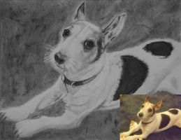 Tiny in charcoal by astrogoth13