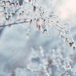 frosting by tjasa