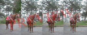 Horse 3/4 Front View Set of 4 by Scorpini-Stock