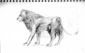 Lion sketch by Night-Forager