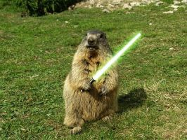 Lightsaber-fun-humor-sword-grass-woodchuck-animals by Xyrus-02
