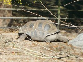 The turtle by amolina45