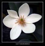 WHITE FLOWER by THOM-B-FOTO