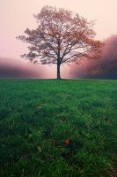 Good morning, tree. by BenTich