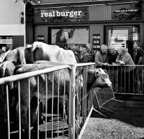 Puck Fair Killorglin. by Treamus