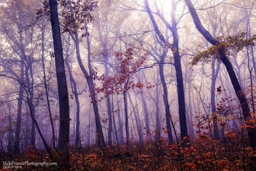 Forest Dreams by VFrance