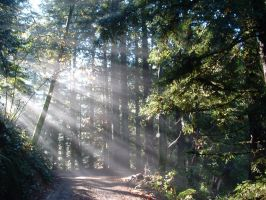 Sunny Redwood Road by mayanbutterfly