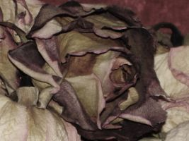 dark bouquet closeup by faded-rose7