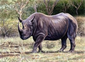 Black Rhino 1 by WillemSvdMerwe