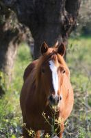brown horse by kailor