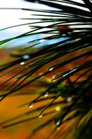 Droplets on a Page by SharPhotography