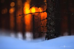 Sunset In Forest by JoniNiemela