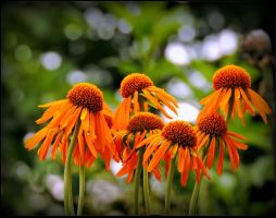 These Orange Flowers... by JocelyneR
