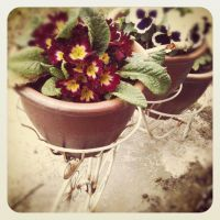 ~Flowerpot Bicycle~ by Belynx16