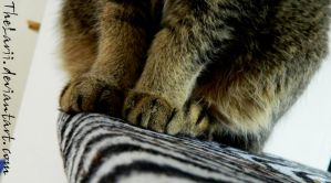 A cat's paws by TheLarii