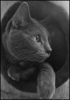 All Cats Are Grey by JJM1981