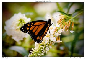 my first monarch butterfly by yellowcaseartist