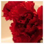 the edge of red... by harmonyrose