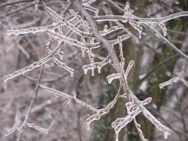 Frozen Branches by punkdaddy74