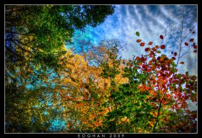 Colours of Autumn by oggie85