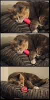 Cat Sleeping With Toy Mouse by GmrGirlX