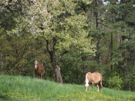 Horses on pasture-serial 3 by sonafoitova