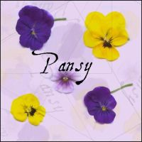 pansy by ShadyMedusa-stock
