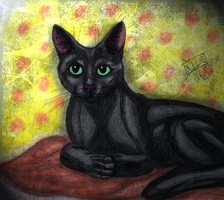 Black cat. by Irkis