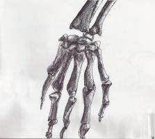 Skeleton Hand by 03ketch03
