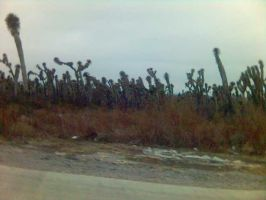 Yucca Forest by cuervoscuro