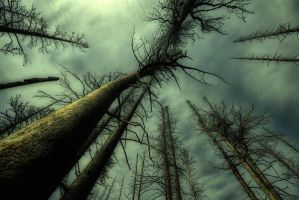 haunted woods around me by jazzy