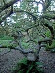 Twisted Tree by Lillagon