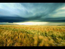 Inflowing Wheat by FramedByNature