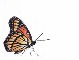 Colored pencil - Butterfly by ArtOfNightSky