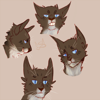 Hawkfrost Expressions by Shimmerspirit