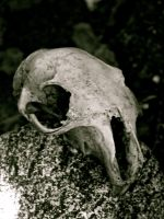 squirrel skull by your-friendly-nukes