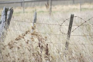 Dry Country by scentedglitter