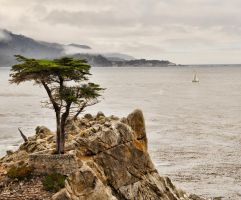 The Lone Cypress by maxlake2