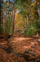 HDR Forest Stream by braxtonds