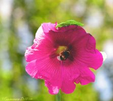 Bee by FrancescaDelfino