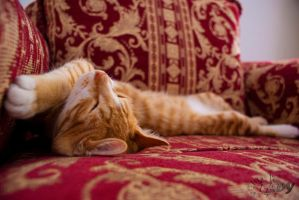 Tiger Cat - Sleeping With Style by Raneem90